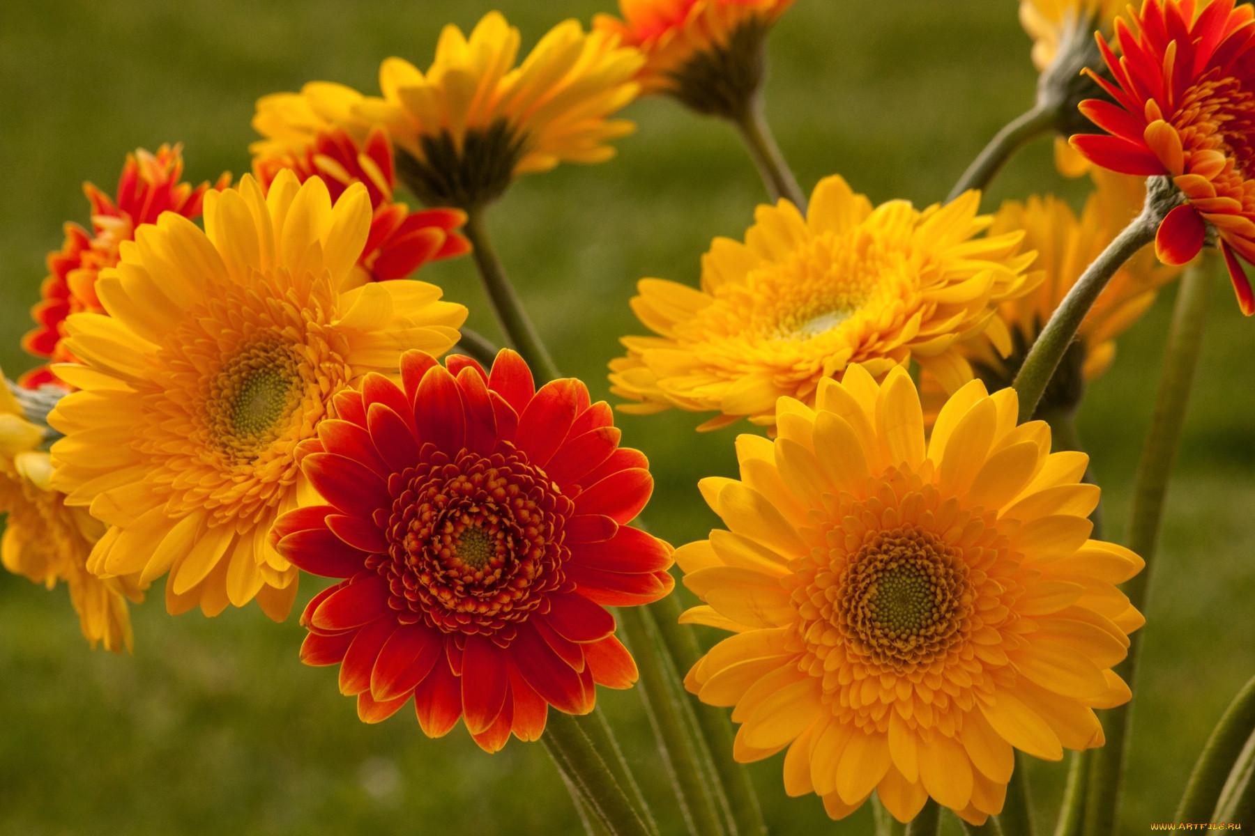 Фото цветов подснежника крокуса борту